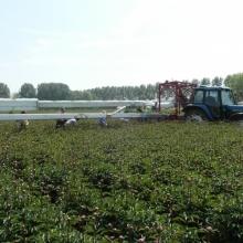 Pioenen oogstband